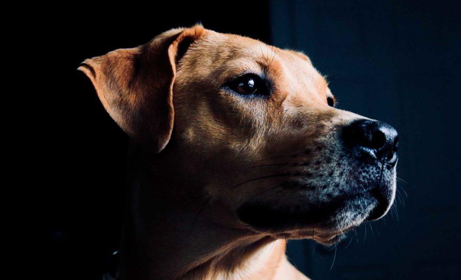 Exposición Canina Lugo