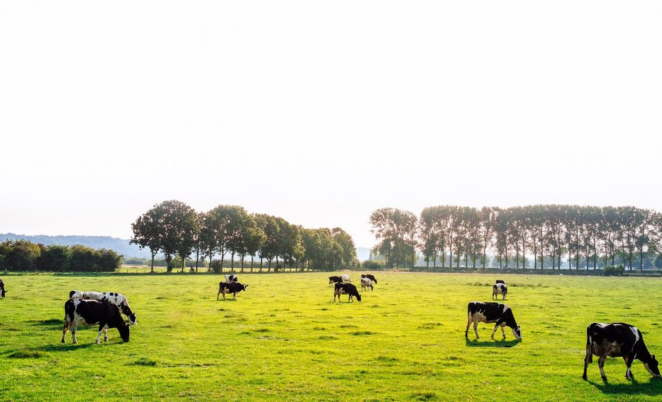 Expolugo 2019 A Rural