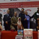 Más de 1.800 perros de hasta 110 razas, protagonistas en el Pazo de Expocanina